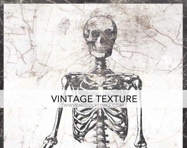 vintage halloween anatomical skeleton sign closeup